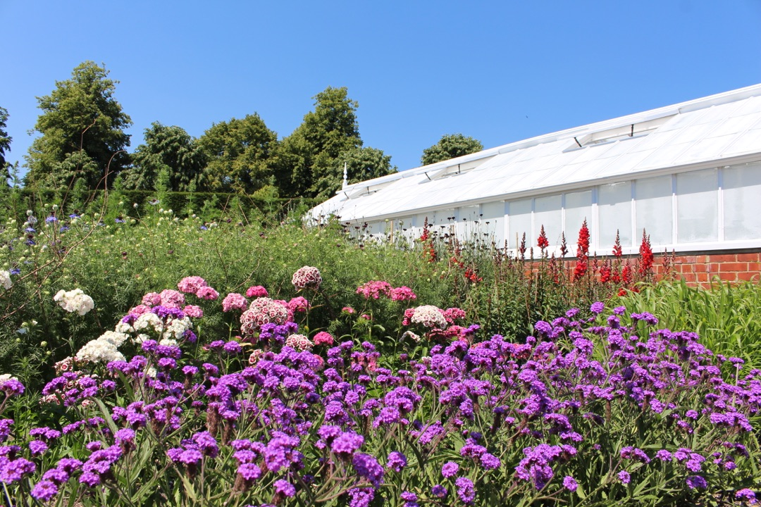 An image showing the cutting garden full of flowers during summer at West Dean Gardens