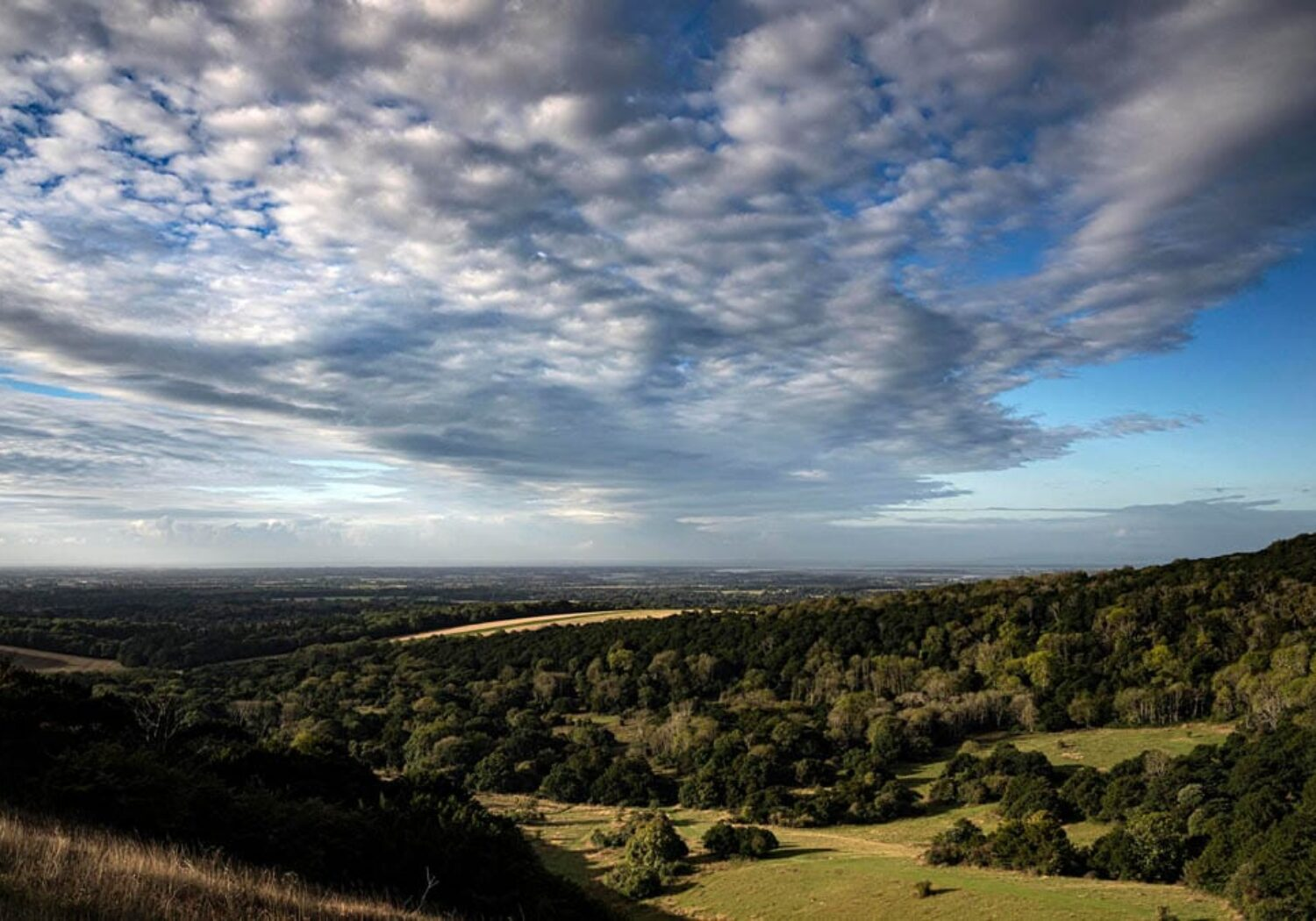 A photograph showing a far reaching view from the top of Kingley Vale nature reserve , West Sussex
