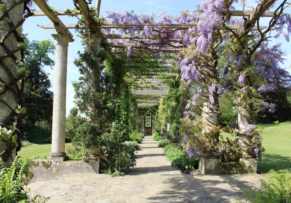 An image showing Wisteria growing over a pergola at West Dean Gardens