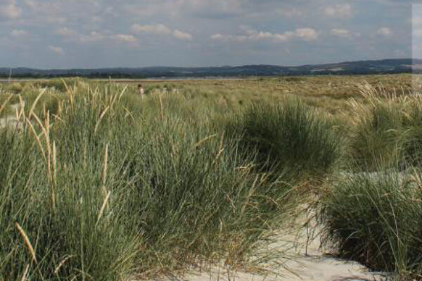 Chichester Harbour Walks No. 6 - West Wittering Beach and East Head