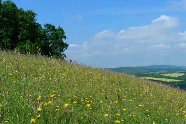 Harting Down Walk