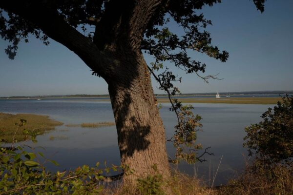An image showing a view of Chichester Harbour from Itchenor, West Sussex