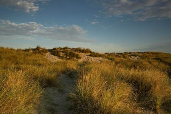 A view of the sand dunes at West Wittering beach, West Sussex