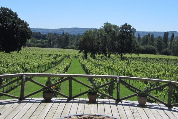 An image of a vineyard which is part of a wine tour by Smooth Red