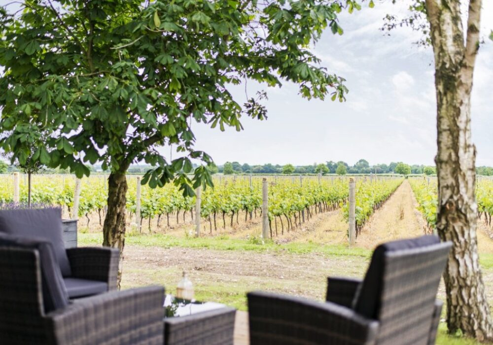 An image showing a terrace overlooking a vineyard on a wine tour with Smooth Red