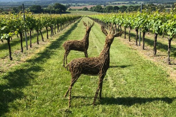 An image showing the backdrop of. the. vineyard at Roebuck Estates, Petworth