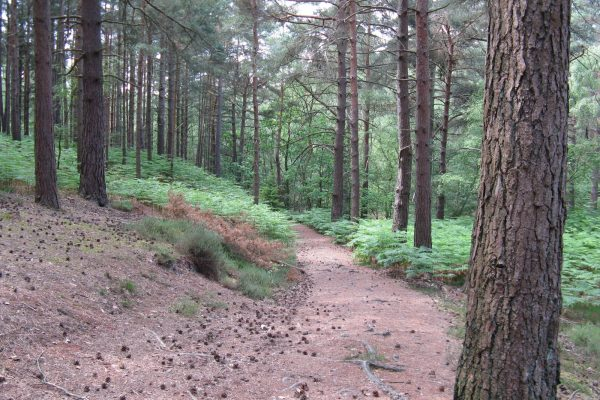an image of Graffham Common in West Sussex