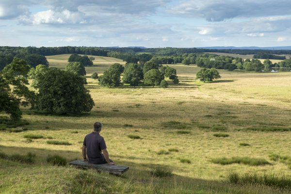Image showing a view across Petworth Park, West Sussex