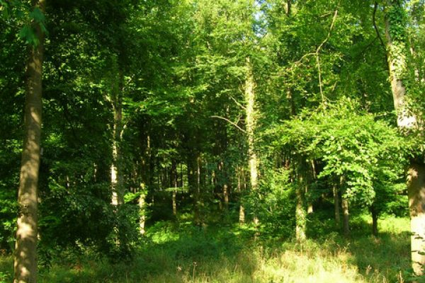 an image showing Wildham Wood in West Sussex