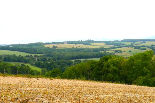 An image from Compton Circular Walk with Uppark House in the distance